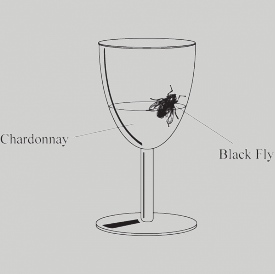black-fly-in-your-chardonnay